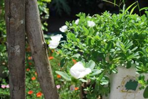 flower white flower plant