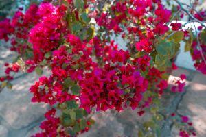 flowers beautiful flowers daytime