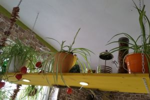 flowers shelf plants