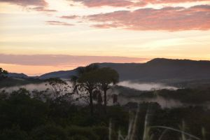fog forest mountain
