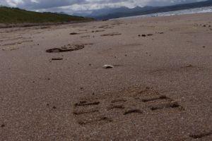 footprint sand footprints beach