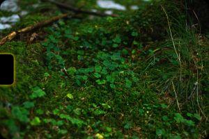 forest retro dark green