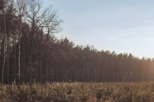 forest sunset landscape nature