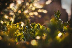 fresh plants green sunset plant