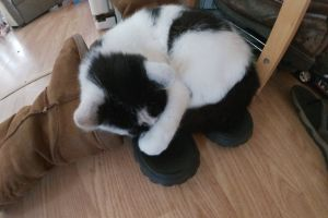 fur ball pets pet cute kitten bed of shoes kitten kitten sleeping funny cat cat aww