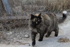 grass cat outdoor cat