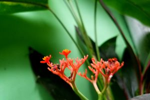 green background red flower fresh nature andreanbass