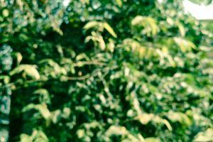 green blurred background dark green blur