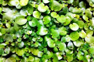 green garden leafs