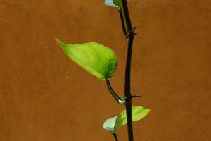 green leaf nature beautiful