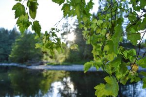 green leaves summertime forest outdoor photography springtime summer summer vibes peaceful forestry trees