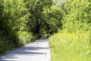 greens trees walkway nature