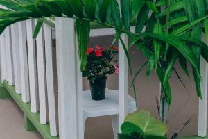 growth texture close-up front porch moments flower pot porch macro lush environment