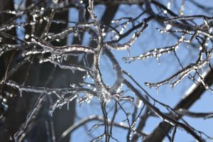 ice frozen trees branches winter