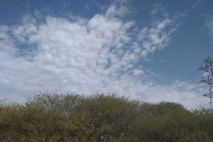 india beautiful sky tree