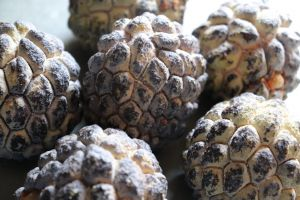 indian fruit fruit custard apple sweetsop sugar apple