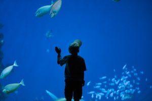 kid sea animal amazed blue mystery deep sea animals shark adventure blue water