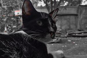 kitten animal feline cat cats