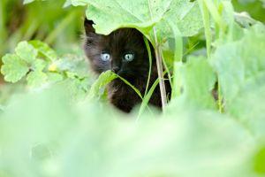 kitten cat grass