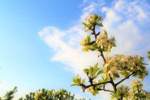 landscape nature tree flower