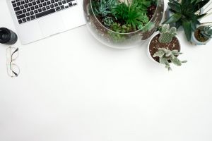 laptop flatlay pot plants succulent cacti