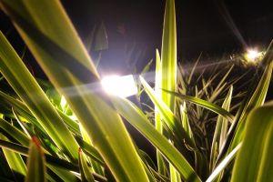 light glare garden lights night garden