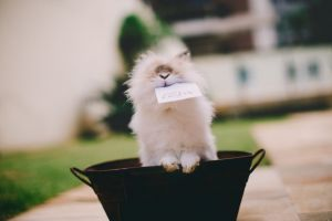 lionhead garden biting mammal adorable little animal photography fur blur tub