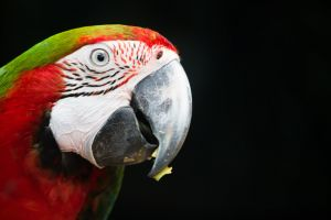 macaw pet animal parrot tropical