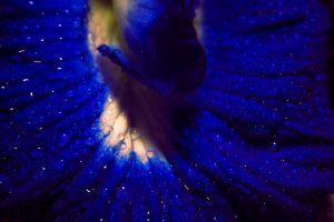 macro close-up view close up dewdrops close-up dewdrop beautiful macro photo petals macro photography