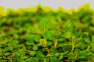 macro green plants nature blur hd wallpaper green wallpaper 5k wallpaper macro photo blurred background