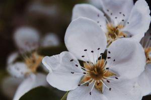 macro spring flower flower macro photo