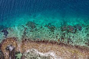 marine life beautiful beach reef drone shot sea color high angle shot rough turquoise