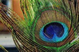 mobile wallpaper peacock feathers 4k wallpaper