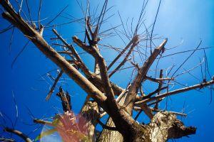 #mobilechallenge dead tree natue 4k wallpaper