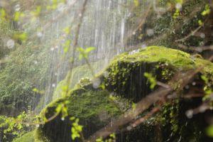moss dewdrop rock landscape green waterfall