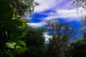 mother nature 4k wallpaper nature park cloudy sky nature photography nature background beauty in nature clear sky low angle photography colorful wallpaper