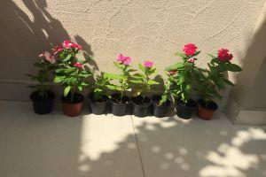 natural plants flowers garden beautiful flowers