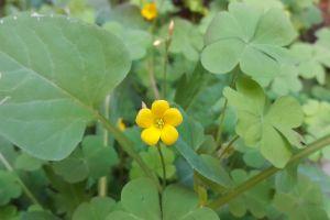natural yellow flower flowers greenery