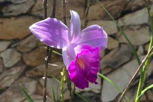 nature beautiful flower purple flower purple