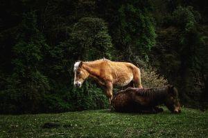 nature fields grass horse