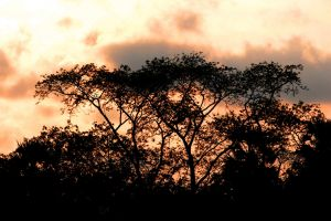 nature fog backlit dark light canada forest sun landscape dawn