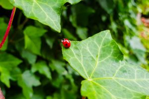nature foliage wellington bug green ladybird bush insect green leaf green leaves