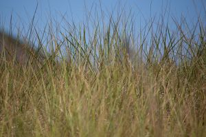 nature grass summer sky