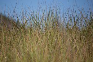 nature grass summer sky