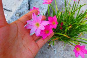 nature home decor garden touch cherish the beauty flowers
