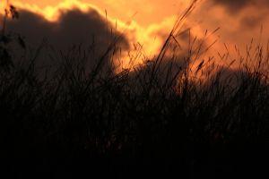 nature love moody dark summer wheat field mood sunshine wheat hd wallpapers
