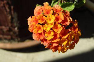 nature orange flower flower yellow flower