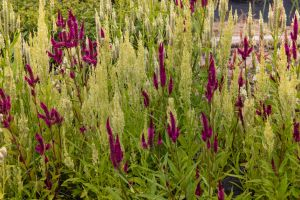 nature photography garden flowers country nature flower bed grow