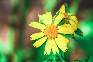 nature photography macro flower
