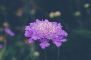 nature photography nature flowers garden purple flower country grow